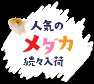 土浦観賞魚┃